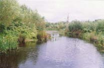 Willow Pond, Noak Bridge Nature Reserve